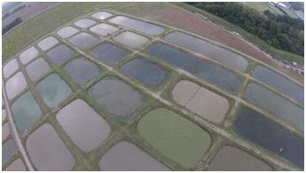 Drone picture of commercial baitfish ponds in Lonoke County.