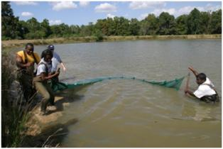 Fish sampling using a seine